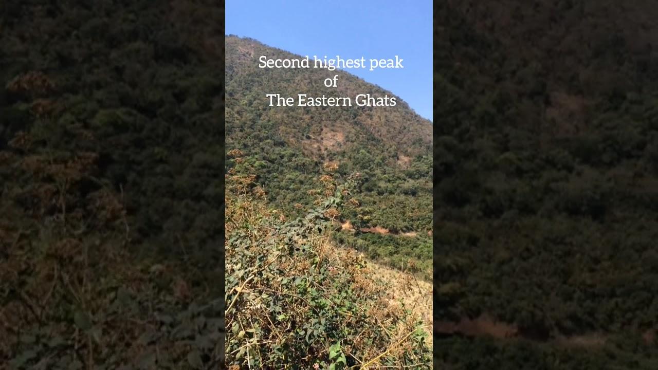 highest peak in eastern ghats