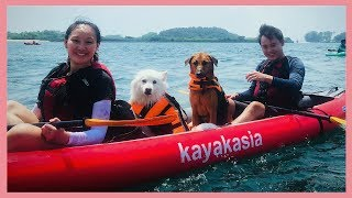 Kayak With Your Dog in Singapore!