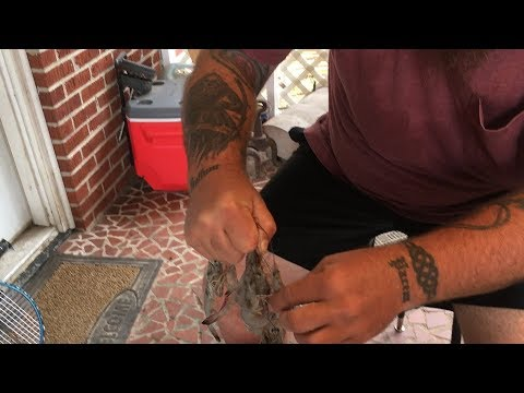 How to Remove Heads - Peel & De Vein Shrimp Clean and Ready to EAT!