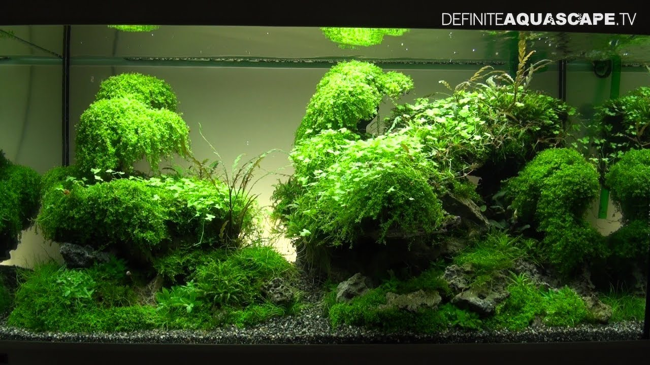 Aquarium Deko Ideen Aquascaping - The Art Of The Planted Aquarium 2013 Xl