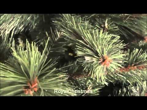 Royal Christmas - микс жесткой и мягкой хвои