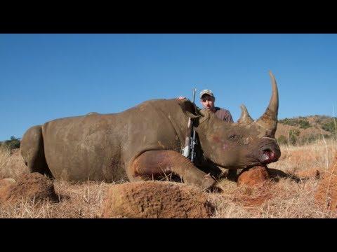 White Rhino Hunt Kwa Zulu Natal