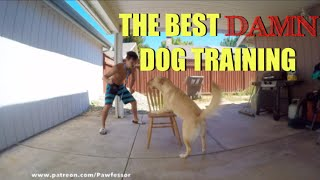 The Best Damn Dog Training | SHAPING w/ A CHAIR