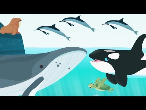 Kids Learn About Ocean Animals Name And Sound - Baby Play Fun Explore Ocean Animal Concepts