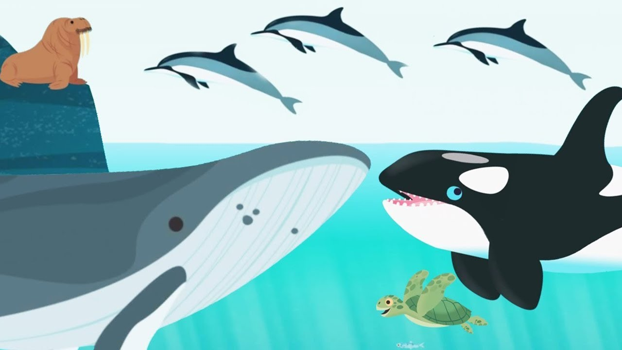Image of: Drawing Kids Learn About Ocean Animals Name And Sound Baby Play Fun Explore Ocean Animal Concepts Summersymphonylivecom Kids Learn About Ocean Animals Name And Sound Baby Play Fun