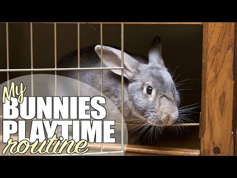 My Bunnies Playtime Routine