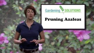 Gardening Solutions - How to Prune Azaleas