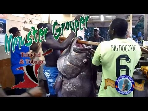 Monsterous Grouper Caught In Small Fishing Village In Tobago, 300+lbs