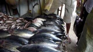 Sri Lanka,ශ්‍රී ලංකා,Ceylon,Kandy:Visit of a market,Fish dealer