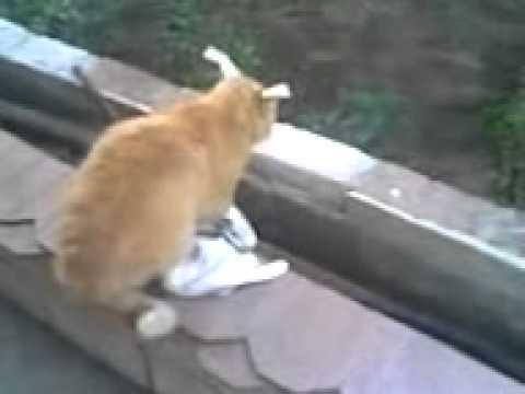 Кот и заяц игры