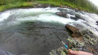 Ловля форели. Новое место.Многообещающая река. Но обещать не значит ловиться(.