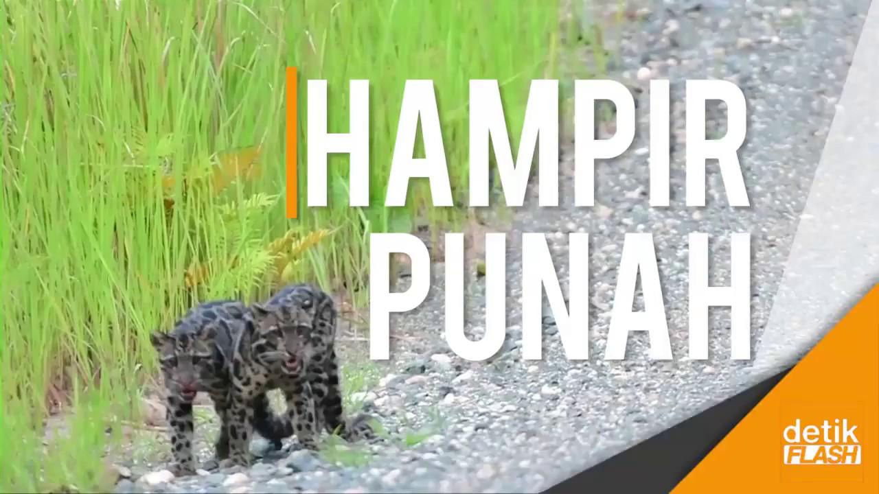 Link Download Bermacam Contoh Gambar Harimau Akar Yang