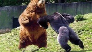 Самые сумасшедшие драки животных