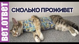 Сколько кошка проживет после удаления опухоли? ВетОтвет