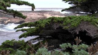 Point Lobos State Reserve|Carmel CA Attractions|Big Sur Highway|