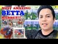 MOST AMAZING BETTA FISH MARKET IN THAILAND!!! Chatuchak on wednesday