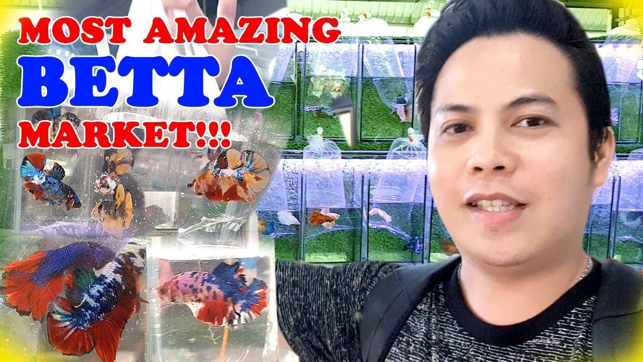MOST AMAZING BETTA FISH MARKET IN THAILAND!!! Chatuchak on wednesday