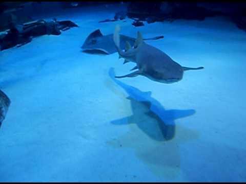 London Aquarium - Sharks :)