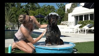 Beauty Insider - MONAT Pet Gentle Cleansing Shampoo and Deodorizing Spray