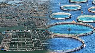 Modern Fish Farming On The Rise And Gaining Momentum Worldwide