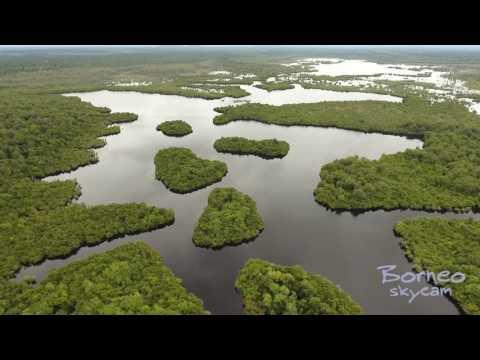 Keindahan Alam Kawasan Danau Sentarum