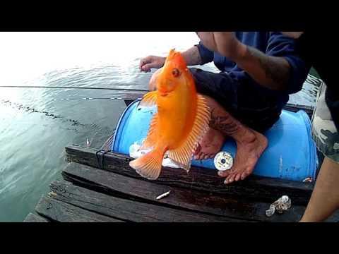 Lake Batur kintamani BALI // Mancing di Danau Batur