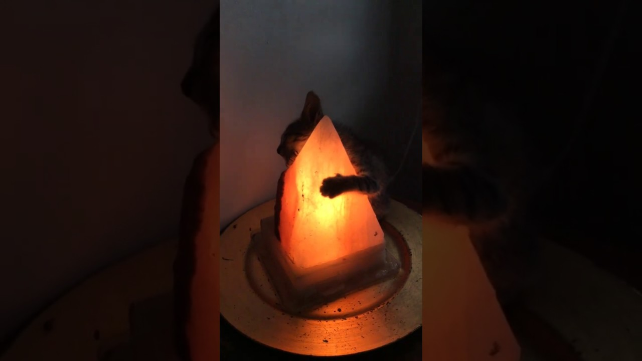Young Cat Found Blissfully Hugging Warm Lamp Youtube