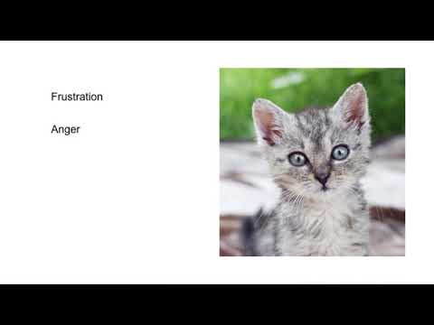 BAHFest East 2017 – Ben Tolkin: Why are Baby Animals So Cute?
