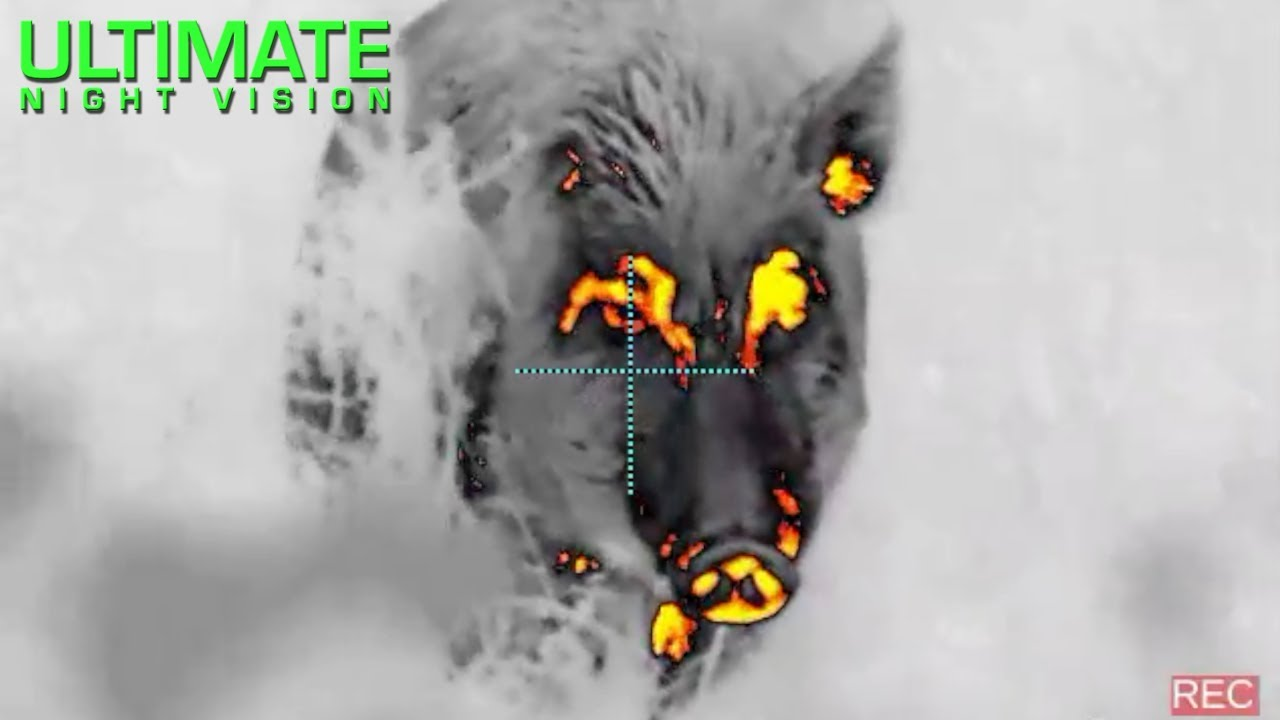 Giant Boar Taken in Texas Using Thermal Imaging | N-Vision Halo & Pulsar Thermion