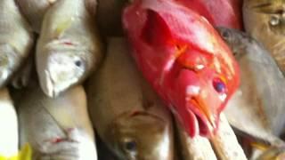 Где дешево купить рыбу и морепродукты на Бали(, 2016-04-25T20:49:51.000Z)