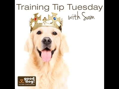 "Training Tip Tuesday - Using the ""Wait"" Command at the Door"
