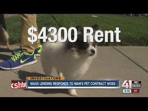 Wags Lending responds to man's pet contract woes - YouTube