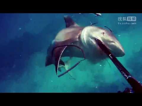 实拍澳洲潜水员水下遇鲨鱼袭击 反应敏捷将其刺死