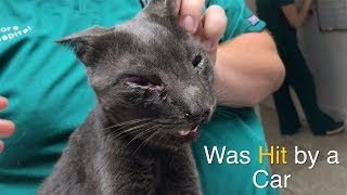 Cat HIT by a CAR