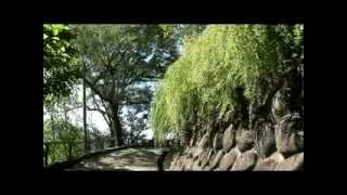 関西花の寺 高照寺の白萩