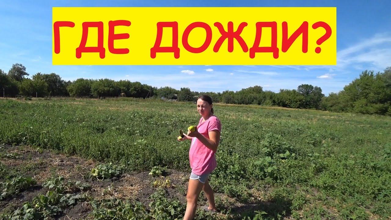 Проверяем урожай картошки / 2 месяца без дождей / Поехали на пляж