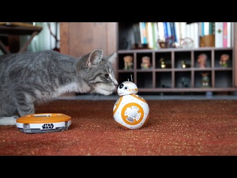 BB-8 and Lucy the Cat have fun