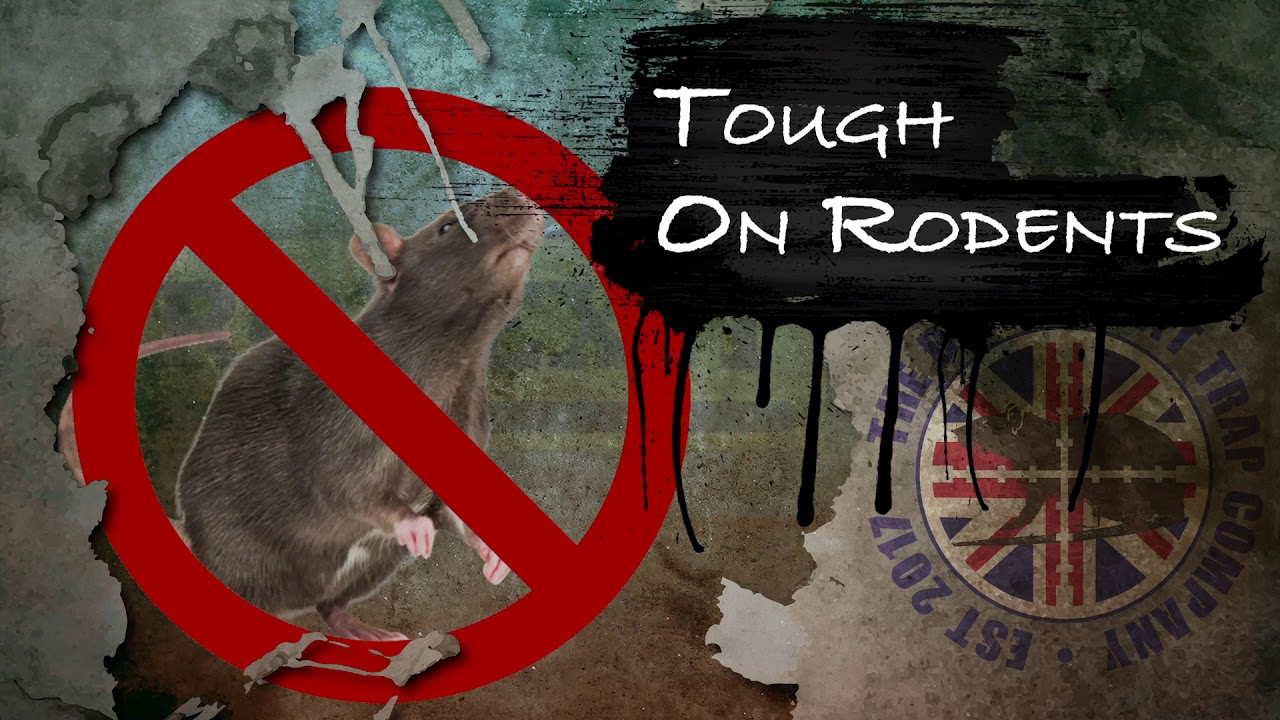 RODEXIT Exclusion | Home & Business | Keeps Mice and Rats Out