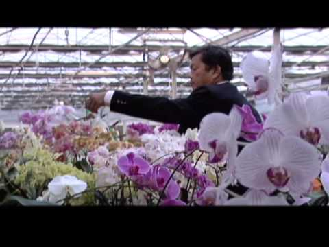 The Story of Taiwan's Industry Clusters  #2 Orchid Industry