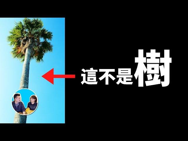 我們的地球上根本沒有樹 | 老高與小茉 Mr & Mrs Gao