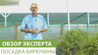 видео бирючина размножение