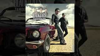 Black Cats - Tamoomam Kon OFFICIAL TRACK