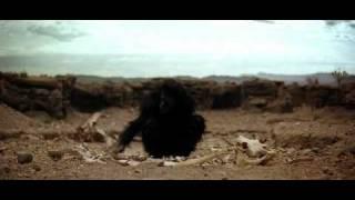 Ape. '2001: A Space Odyssey' / Dawn of man