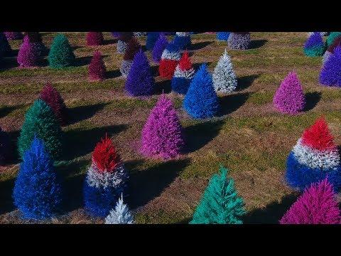 Temple - Rainbow Christmas Trees