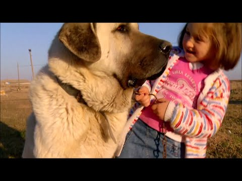 THE KANGAL DOG WITH CHILDREN