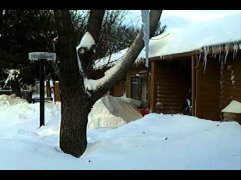 BLIZZARD 2010 SNOWED IN