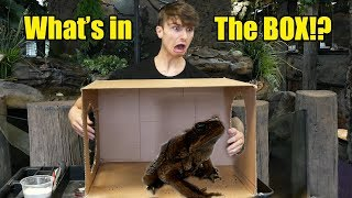 whats-in-the-box-challenge-live-repitle-edition