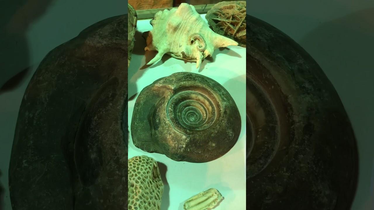 زيارتنا لمتحف النايف بمركز جبّة شمال حائل.11-11-1441هـ صالح عياد