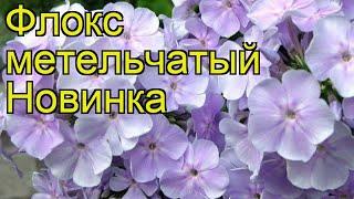 Флокс метельчатый Новинка. Краткий обзор, описание характеристик phlox paniculata Novinka