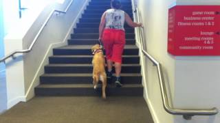 The Teacher's Pet - Service - Abby Learning Stairs